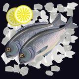 Fishes dorada on ice vector illustration