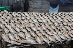 Fishes Drying at the sun Royalty Free Stock Photo