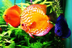 Fishes in Dubai water world. Beautiful aquarium with fishes from The Red Sea Royalty Free Stock Images