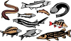 Fishes. European freshwater fishes - stylized color illustrations Stock Image