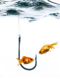 Fishes And Fish Hook Royalty Free Stock Photo