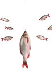 Fishes and fish on a hook,  isolated on white, clipping path. Fishes and fish on a hook, isolated on white background with clipping path included Royalty Free Stock Photos