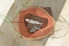 The fishes in the fishing net. The fishes in the fishing net on the floor stock images