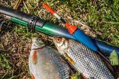 Fishes with fishing tackle on the ground Stock Images