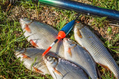 Fishes with fishing tackle on the ground Royalty Free Stock Photo