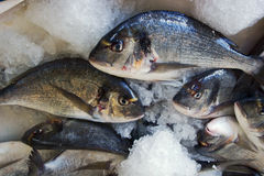 Fishes in fishmonger Royalty Free Stock Photography