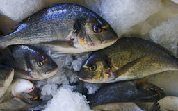 Fishes in fishmonger, Zakynthos Stock Image