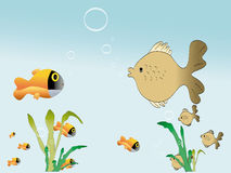 Fishes and float grass. A photo of tropical fishes ang float grass in ocean Stock Photography