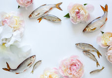 Fishes and flowers background Royalty Free Stock Photography