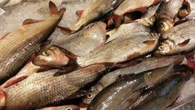 Fishes fresh Royalty Free Stock Photos