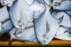 Fishes in fresh seafood market Stock Image