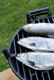 Fishes on grill Royalty Free Stock Photos