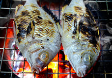 Fishes grill on the charcoal . Fishes grill on the charcoal cooking photo in flash lighting Royalty Free Stock Image