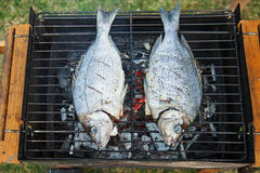 Fishes on grill Royalty Free Stock Images