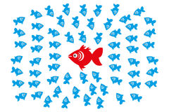 Fishes in Group Leadership and Management Concept Stock Image