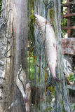 Fishes hang in a fishing net Royalty Free Stock Photos