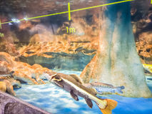 Fishes in Hanwah Aqua Planet Jeju, located nearby Seopjikoji and Royalty Free Stock Photos