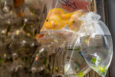 Fishes at the Hong Kong Goldfish market - 7 Royalty Free Stock Photography