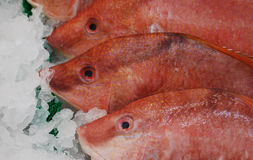 Fishes on ice Stock Photo