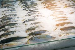 Fishes on ice in market. Fresh fishes on ice in market stock image