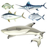 Fishes. Illustration of the fishes on a white background Stock Image