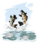 Fishes jump out from water after a dragon-fly. Two carp jump out from water after a dragon-fly on sky background Stock Image