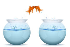 Fishes jumping from tank. Illustration of fishes jumping from tank on white background Stock Image