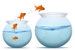 Fishes jumping from water. Illustration of jumping fishes on tank on white background Stock Image