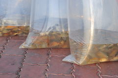 Fishes are kept in plastic bags preparing to be released in the Saigon river in the National Fisheries day in Vietnam Stock Photo