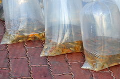 Fishes are kept in plastic bags preparing to be released in the Saigon river in the National Fisheries day in Vietnam Stock Photography