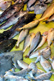 Fishes. Kinds of fish selling in market, shown as different, various and market business dealing Stock Images