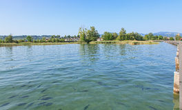 Fishes in lake Zurich Stock Photography