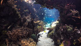 Fishes in Lisbon Oceanarium with corals, Portugal stock video footage