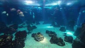Fishes in Lisbon Oceanarium, Portugal timelapse stock video footage
