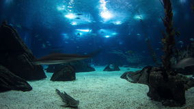 Fishes in Lisbon Oceanarium with rocks, Portugal stock footage