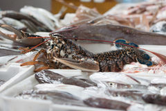 Fishes and lobster. Marine life on the shop counter Royalty Free Stock Photo