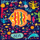 Fishes and marine life Stock Photos