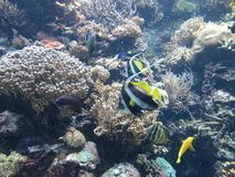 Fishes. Marine vegetation under water, water world Stock Photography