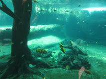 Fishes. Marine vegetation under water, water world Stock Images