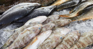 Fishes at market Royalty Free Stock Images
