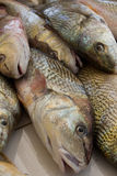 Fishes at a Market. Many fishes at a market Stock Photo