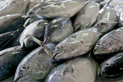 Fishes in the Market Royalty Free Stock Images