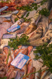Fishes on the market Royalty Free Stock Image