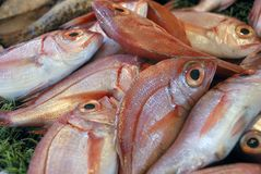 Fishes at a market place Royalty Free Stock Image