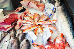 Fishes at market. Raw and fresh fish at food market Stock Photo