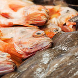 Fishes at the market Royalty Free Stock Photos
