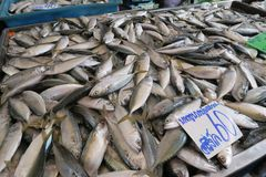 Fishes at the market, Thailand Royalty Free Stock Photo