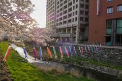 Fishes in Matsumoto, Japan. Visited April 2019 royalty free stock images