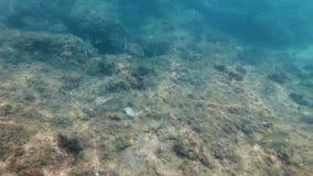 Fishes in the mediterranean costa brava, Spain. Underwater 4k shot, fishes in the mediterranean costa brava, Spain stock video