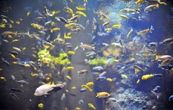 Fishes in natural background Stock Photos